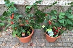 Blumentöpfe Gemüse