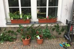 Kistchen und Gemüsetöpfe