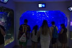 HdM Aquarium