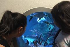 HdM Kreis Aquarium