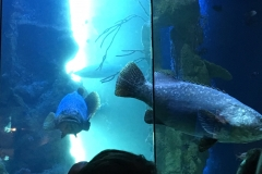 HdM große Fische